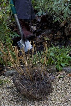 Planten en struiken verplanten - wanneer en hoe