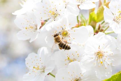 Bijen helpen in de tuin