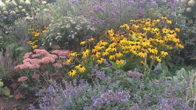 Border aanleggen met vaste planten