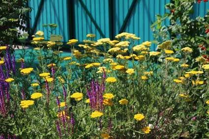 Beplantingsplan Natuurlijke Tuin : Beplantingsplan voor de tuin directplant
