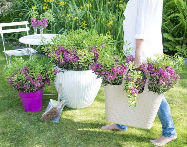 Struiken Met Bloemen Voor In De Tuin.Bloeiende Struiken Directplant