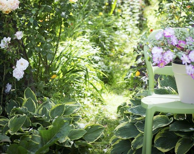 Roze rozen in de tuin