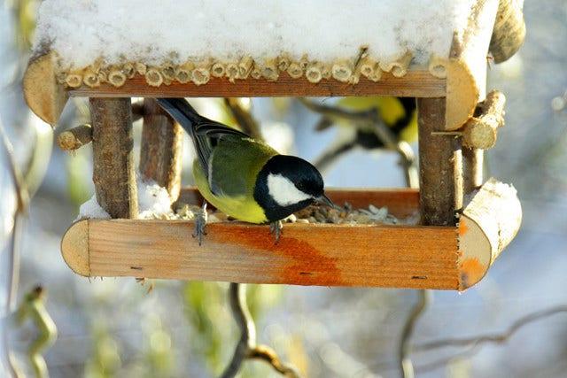 Vogels in de winter voeren