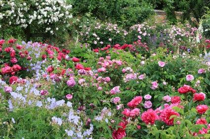 Rozentuin - rozen combineren