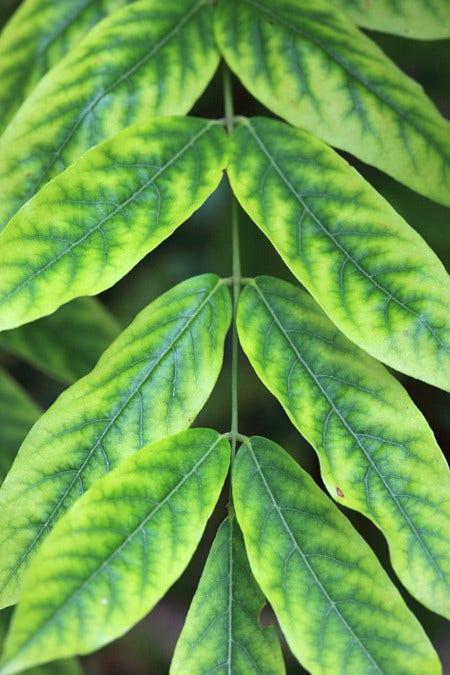 Gebreksverschijnselen - planten met voedingsproblemen