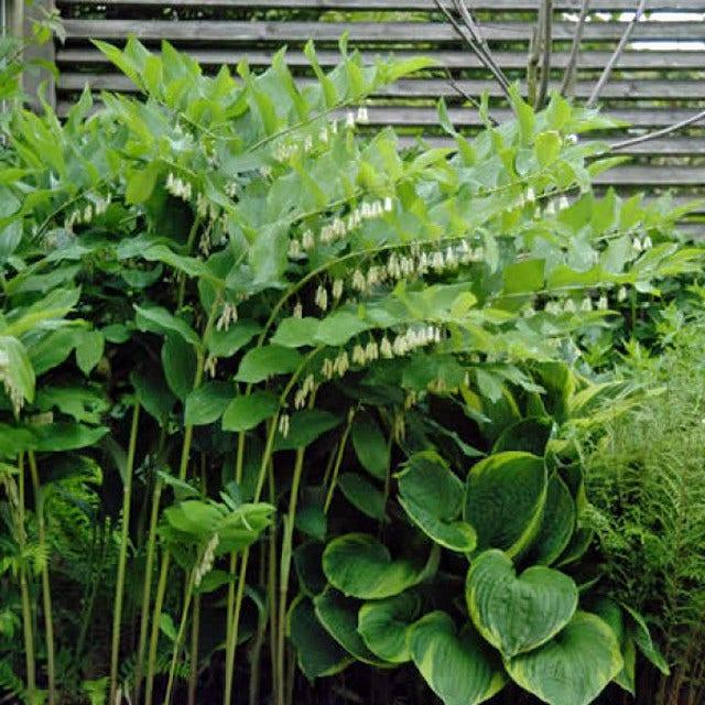 Vaste planten met mooi blad