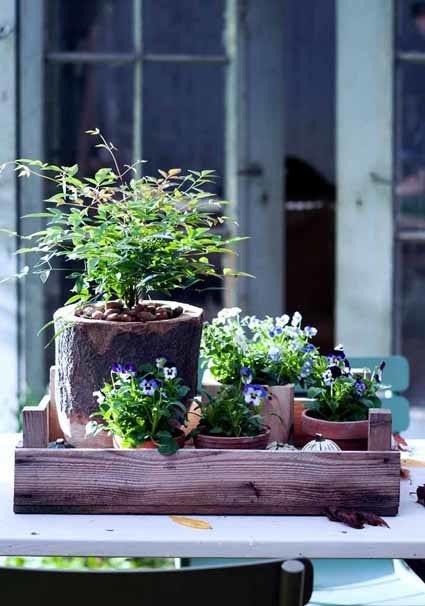 Winterplanten combineren