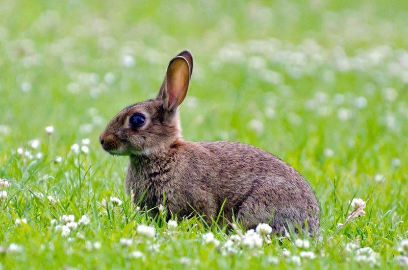 Planten die konijnen niet lusten