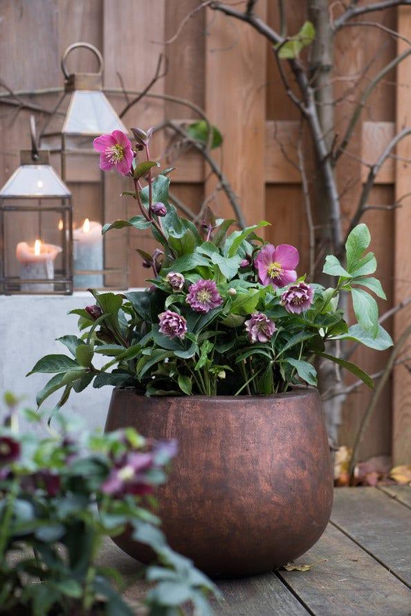7 tuinideeën voor de winter