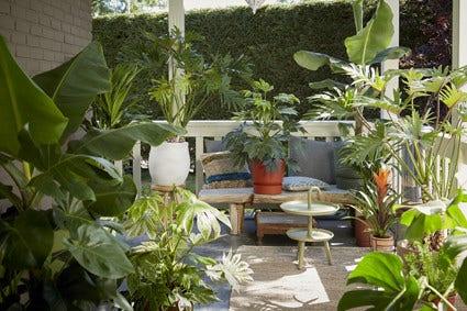 Kamerplanten naar buiten en tuinplanten naar binnen