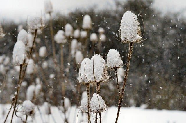 Planten voor de wintertuin