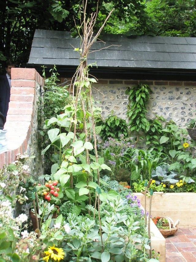 Klimplanten opbinden