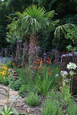 Tropsiche tuin - planten en ontwerptips