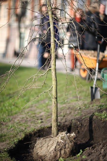 Bomen planten - hoe doe je dat