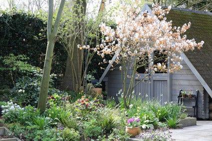 Bostuin - tips voor ontwerp en planten