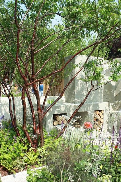 Meerstammige bomen - planten en verzorgen