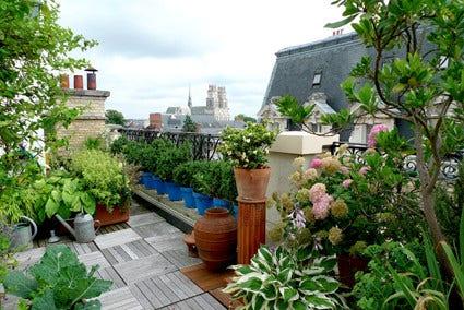 Planten voor een daktuin of dakterras