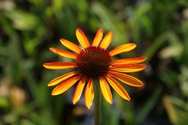 Vaste Planten Tuin : Vaste planten in de tuin soorten en verzorging directplant