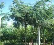 Hoogstambomen