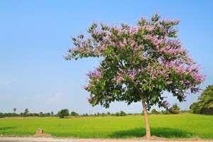 Ongebruikt Wintergroene bomen kopen? Altijd goedkoop! | Directplant CQ-22
