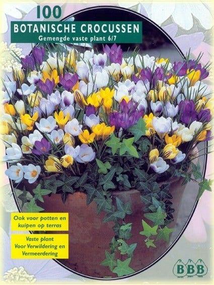 Botanische Crocussen (Crocus 'Botanisch' mix) - per 100