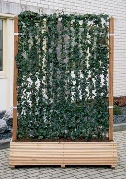 Kant en klaar haag in Hardhouten bakken - Hardhouten bak (145x60x50)