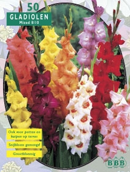 Gladiolen (Gladiolen mix) - per 25. Kleur: meerkleurig