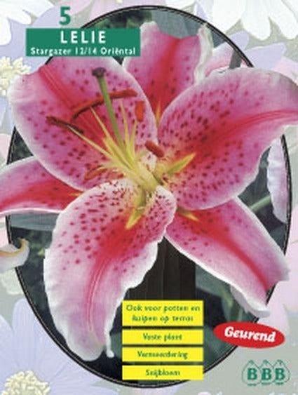 Lelie (Lilium Stargazer) - per 5. Kleur: roze