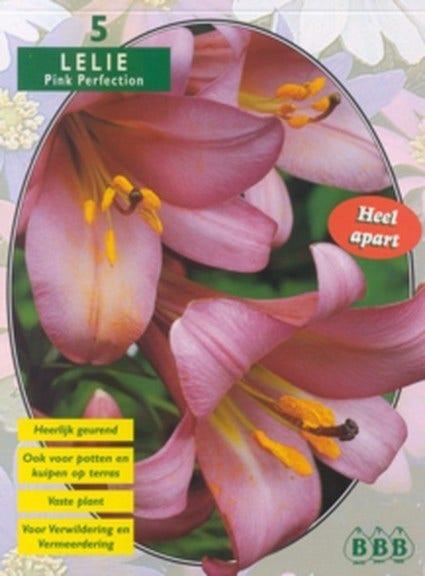 Lelie (Lilium Pink Perfection) - per 3. Kleur: roze