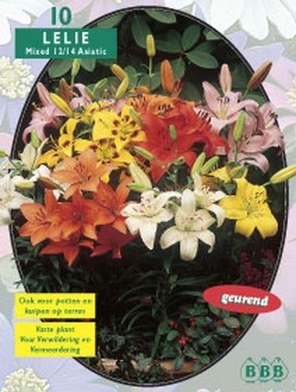 Lelie (Lilium Mixed) - per 10. Kleur: meerkleurig