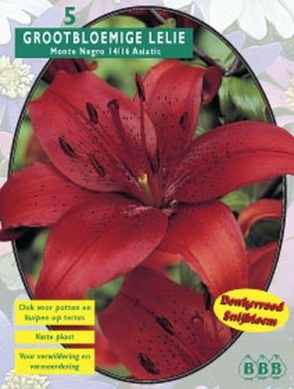 Lelie (Lilium Monte Negro) - per 5. Kleur: rood
