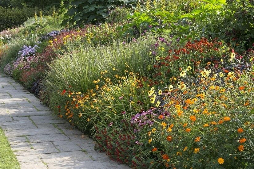 Borderpakket Vrolijke zomerbloeiers-Plant in pot-Per 4.5 m²