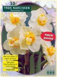 Narcis (Narcis 'Cheerfullness, Wit')