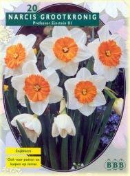 Narcis (Narcis 'Professor Einstein')