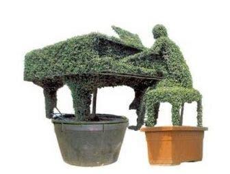 Pianist (Ligustrum delavayanum)