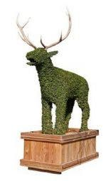 Deer (Ligustrum delavayanum)