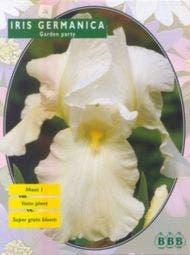 Iris (Iris Germanica White)