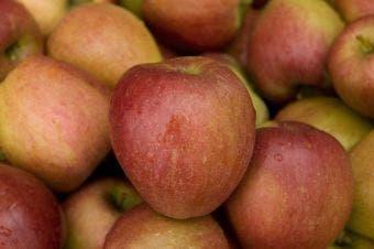 Appelboom (Malus domestica 'Braeburn')