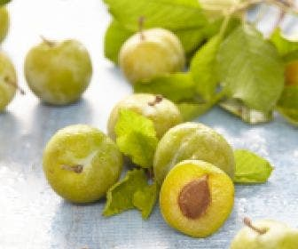 Pruimenboom (Prunus domestica 'Reine Claude Verte')