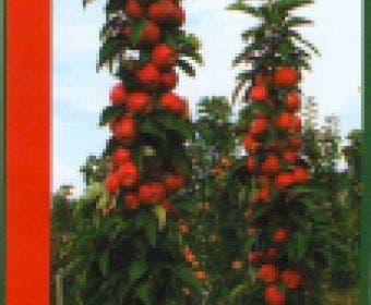 Zuilfruit (Malus domestica 'Redcats')