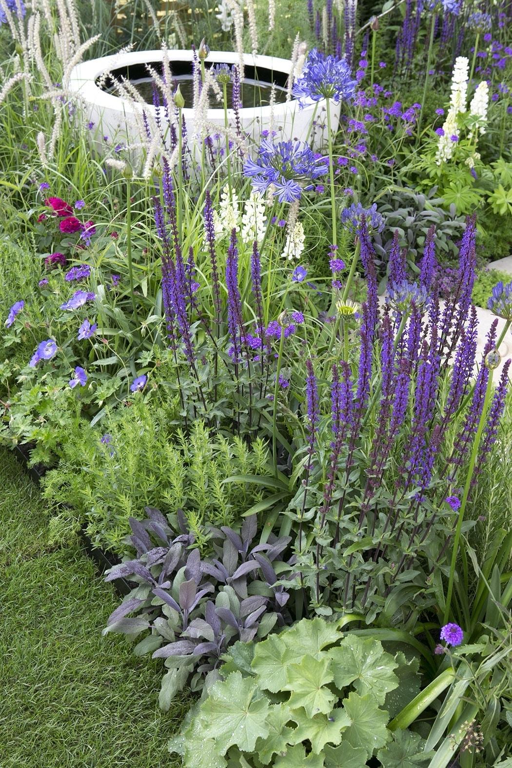 Borderpakket Smalle border in paars-Plant in pot-Per 2 m². Kleur: paars