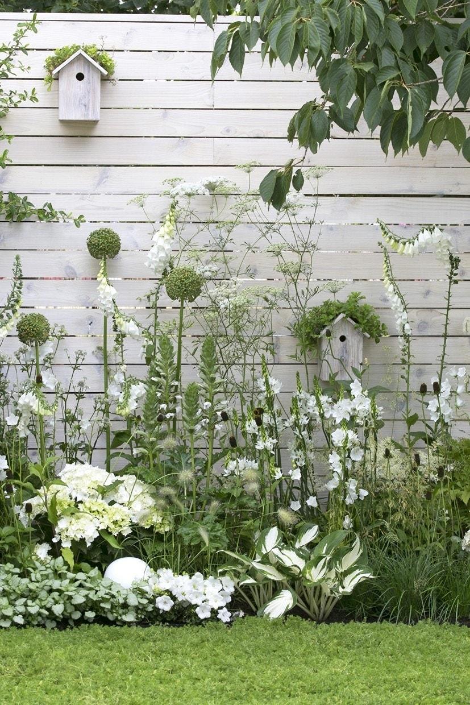Borderpakket witte border-Plant in pot-Per 3 m². Kleur: wit