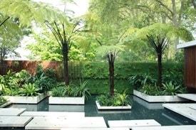 Tropische tuin met boomvaren