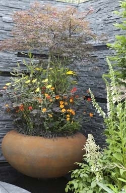 Tuin in pot - esdoorn