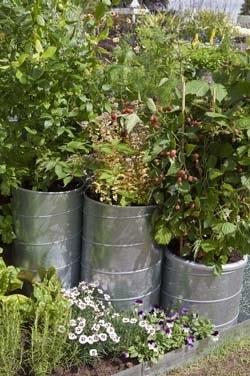 Fruit tuin in pot