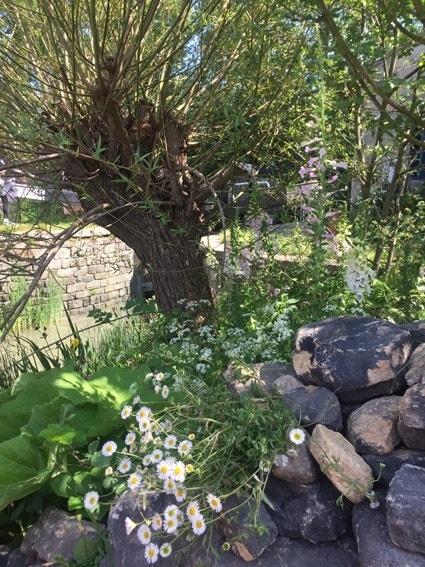 Natuurlijke duurzame tuin - biodiversiteit