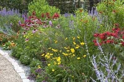 Prairieplanten in een vlinderborder