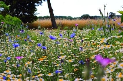 natuurlijke wilde tuin - bloemenweide