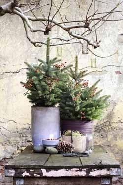 Kerstboom fijnspar